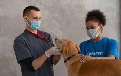 La téléconsultation vétérinaire: une aubaine pour les maitres chiens 2.0